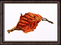 Winter Beech Leaf
