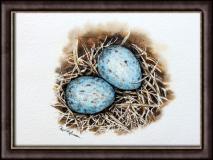 Blackbird Eggs
