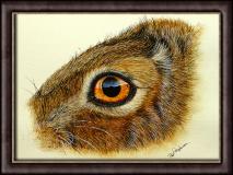Hare's Eye Study