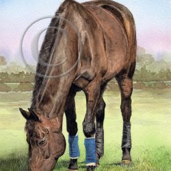 Giclée Watercolor Horse Print with Fine Art Detail