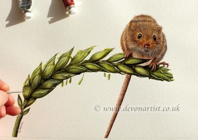 Detailed written PDF tutorial with lots of photos, learn how to paint a mouse in watercolor