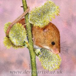 Harvest mouse in watercolour, painting by Paul Hopkinson