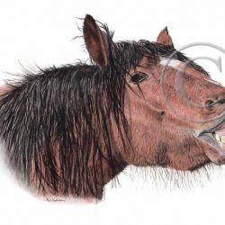 Watercolour Print Dartmoor Pony, Realistic Art