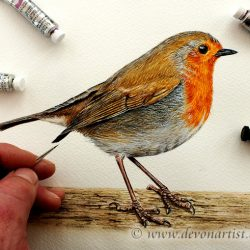 Painting a robin in detailed watercolour