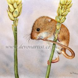 How to paint a harvest mouse in watercolour DVD video tutorial