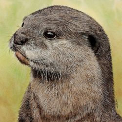 How to paint an otter. Easy step by step lesson using watercolour