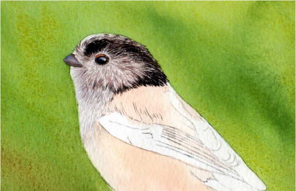 Detailed watercolour pdf tutorial paint realistic bird, stage 2