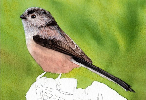Detailed watercolour pdf tutorial paint realistic bird, stage 3