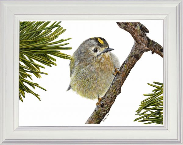 Goldcrest painted in watercolour displayed in a white frame
