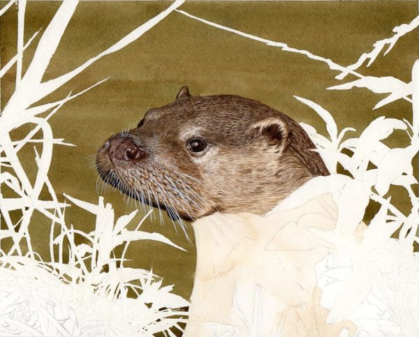 How to paint an otter illustration in watercolour stage 2
