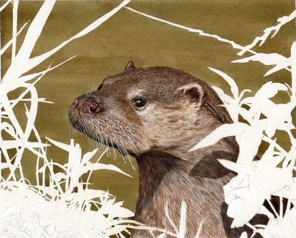 How to paint an otter illustration in watercolour stage 3