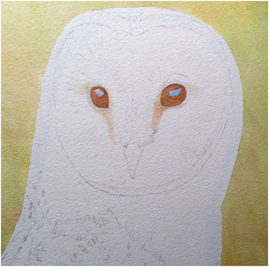 How to paint owls in realistic watercolour, stage 1