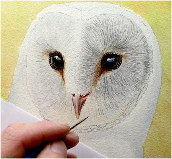 How to paint owls in realistic watercolour, stage