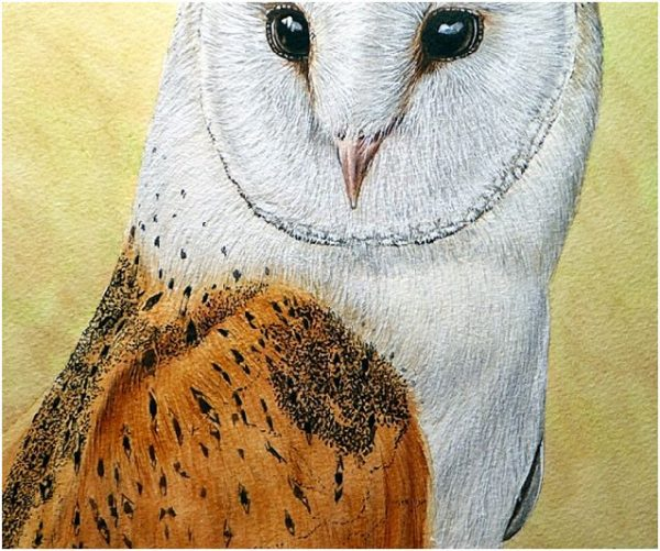 How to paint owls in realistic watercolour, stage 4