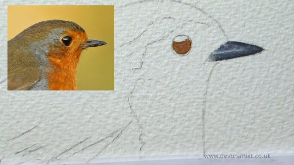 How to paint a robin in watercolour step 1
