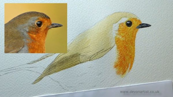 How to paint a robin in watercolour step 2
