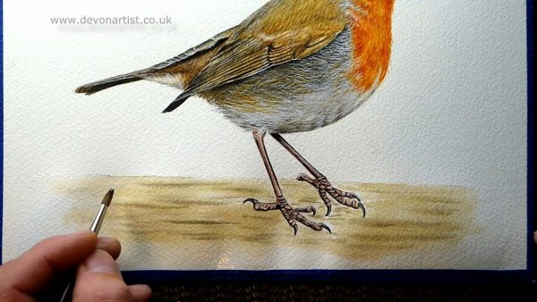 How to paint a robin in watercolour step 4