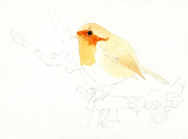 How to paint a robin in watercolour, a tutorial stage 1