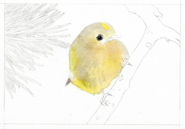 How to paint watercolour step-by-step, a bird painting stage 1