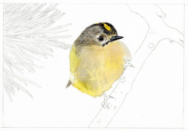 How to paint watercolour step-by-step, a bird painting stage 2