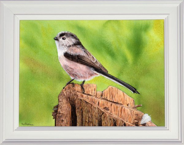 Long tailed tit painted in watercolor displayed in a white frame