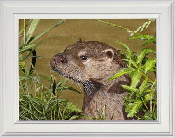 Otter watercolour painting by Paul Hopkinson, shown in a white frame