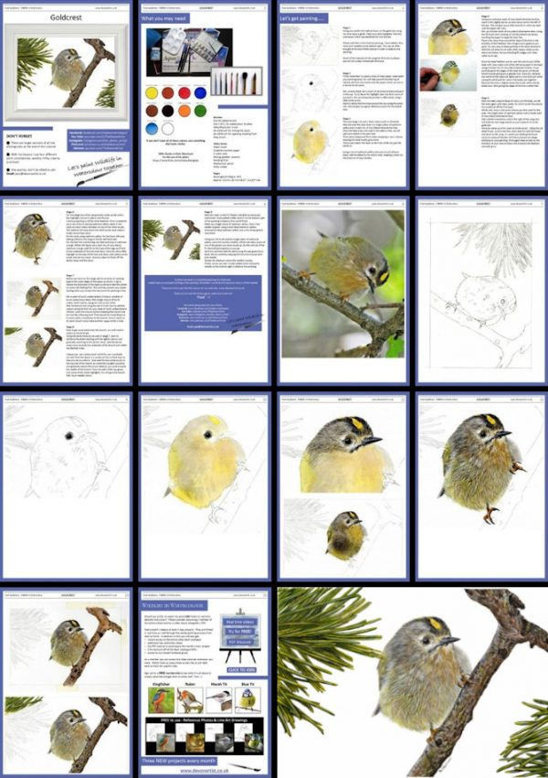 Overview of a PDF watercolour tutorial on a goldcrest bird painting