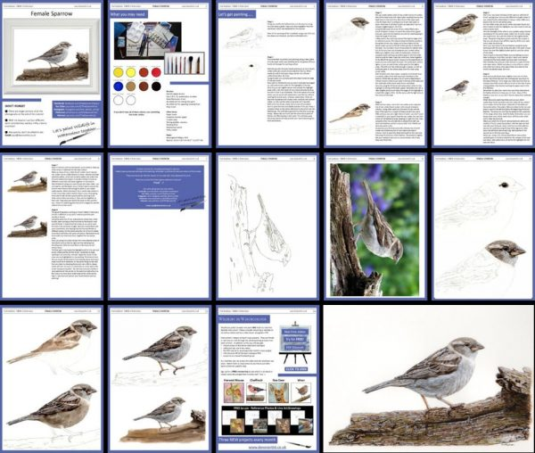 Overview PDF image, paint British birds in realistic watercolour