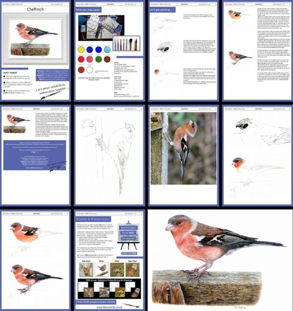 Overview image of a pdf watercolour bird painting lesson