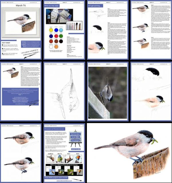 Overview image of a watercolor pdf bird painting tutorial