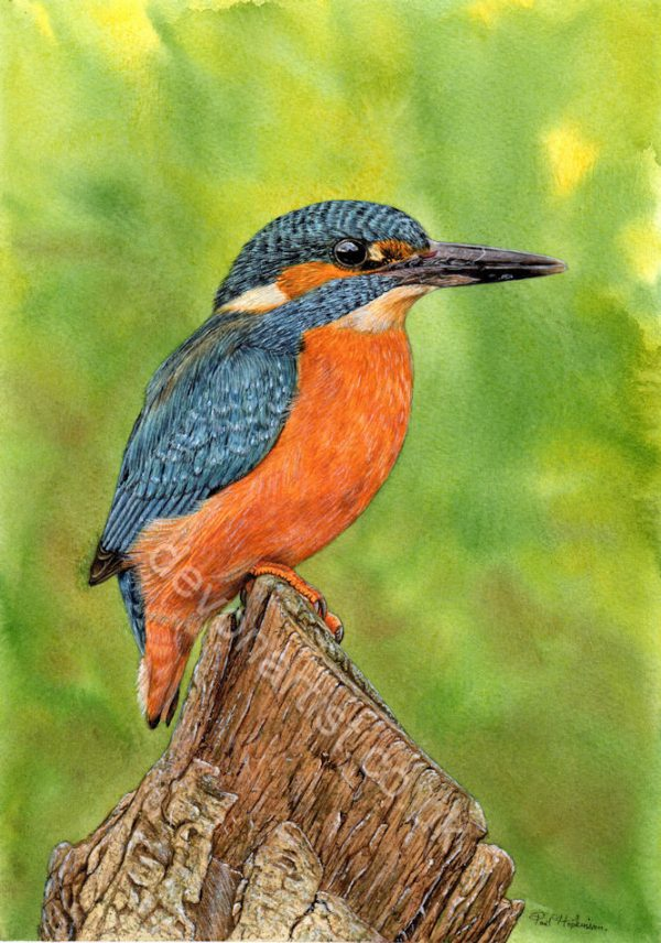 A PDF watercolour tutorial on painting a realistic kingfisher