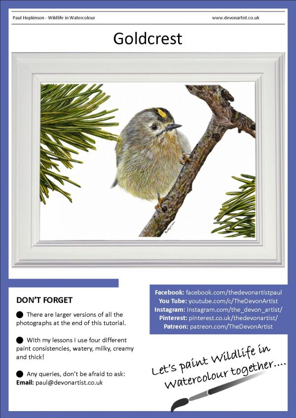 PDF step-by-step goldcrest watercolor painting