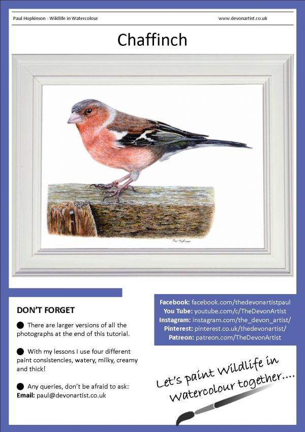PDF watercolour chaffinch painting tutorial