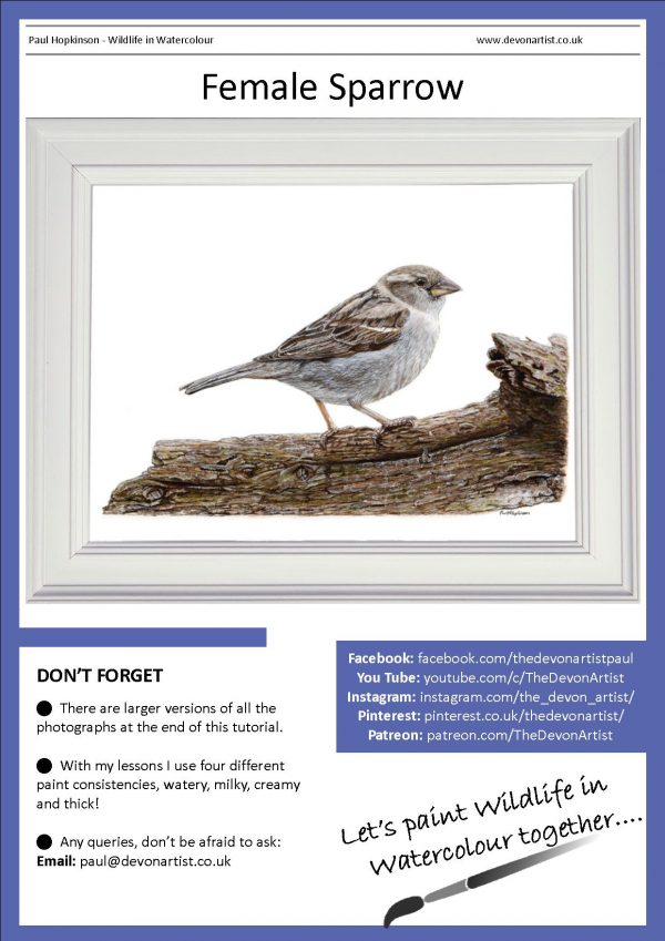 PDF watercolour tutorial, paint a sparrow bird