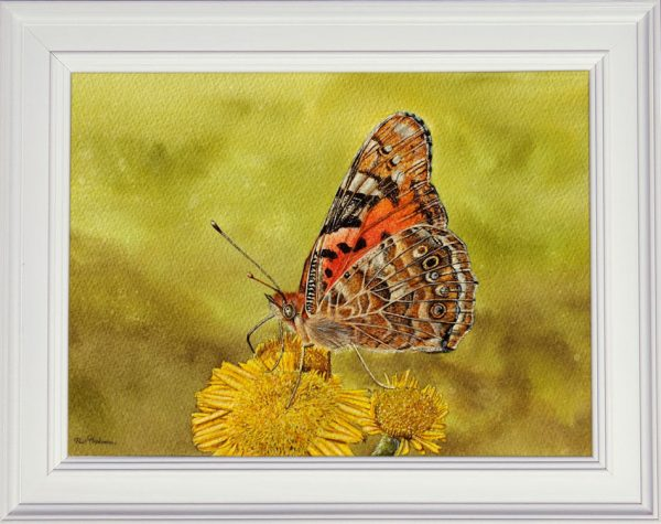 Painted lady butterfly watercolour painting shown framed