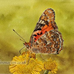 How to paint a butterfly step by step using watercolour