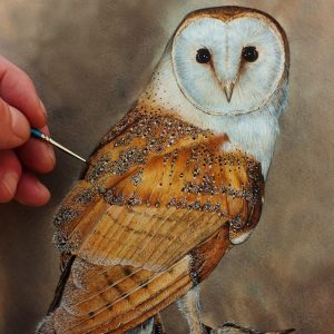 Paul Hopkinson watercolour tutorial on painting a barn owl