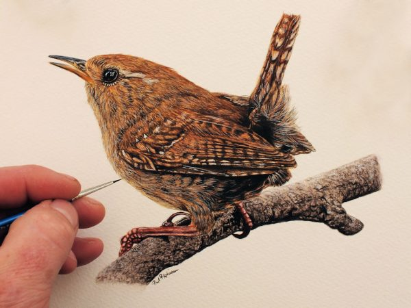 Paul Hopkinson painting a watercolour illustration of a wren