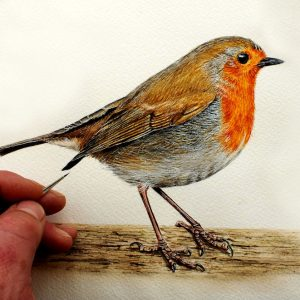 Paul Hopkinson painting a realistic illustration of a robin in watercolour