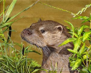 Paint Wildlife in Detailed Watercolour - Eurasian Otter PDF Lesson