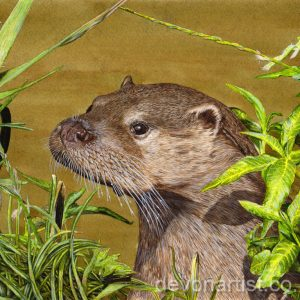 Watercolour tutorial on painting an otter by Paul Hopkinson