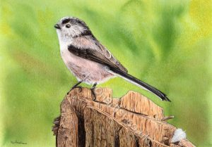 Detailed Watercolour PDF Tutorial - Long Tailed Tit