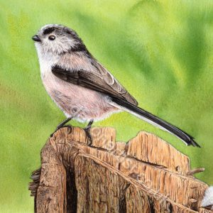 Realistic watercolour painting tutorial of a garden bird by Paul Hopkinson