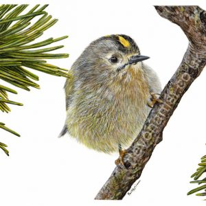Paul Hopkinson watercolor tutorial on painting a goldcrest bird