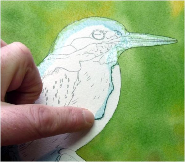 Realistic watercolour kingfisher painting tutorial, stage 1
