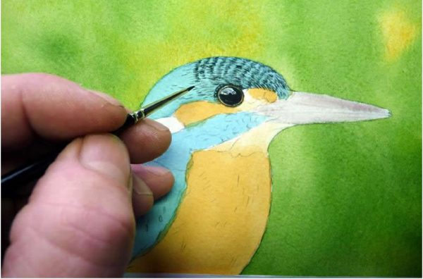 Realistic watercolour kingfisher painting tutorial, stage 2