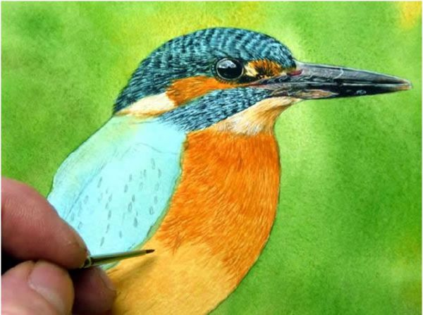 Realistic watercolour kingfisher painting tutorial, stage 3