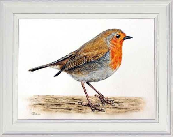 Robin watercolour painting displayed framed