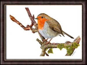 Robin watercolour tutorial final painting framed