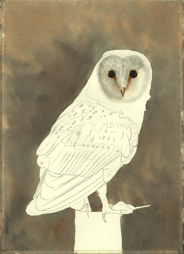 Step-by-step PDF guide on painting owls in watercolour, stage 1
